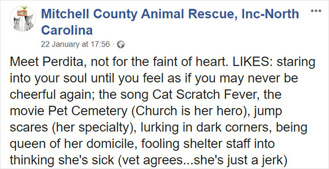 mitchell county rescue profile for worst cat perdita