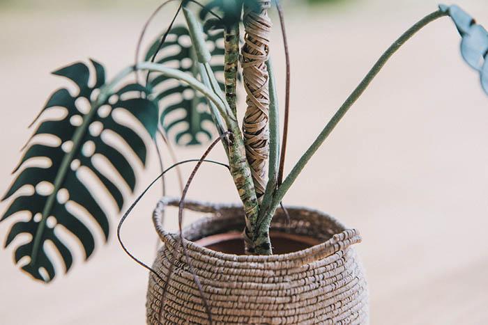 monstera paper plant details
