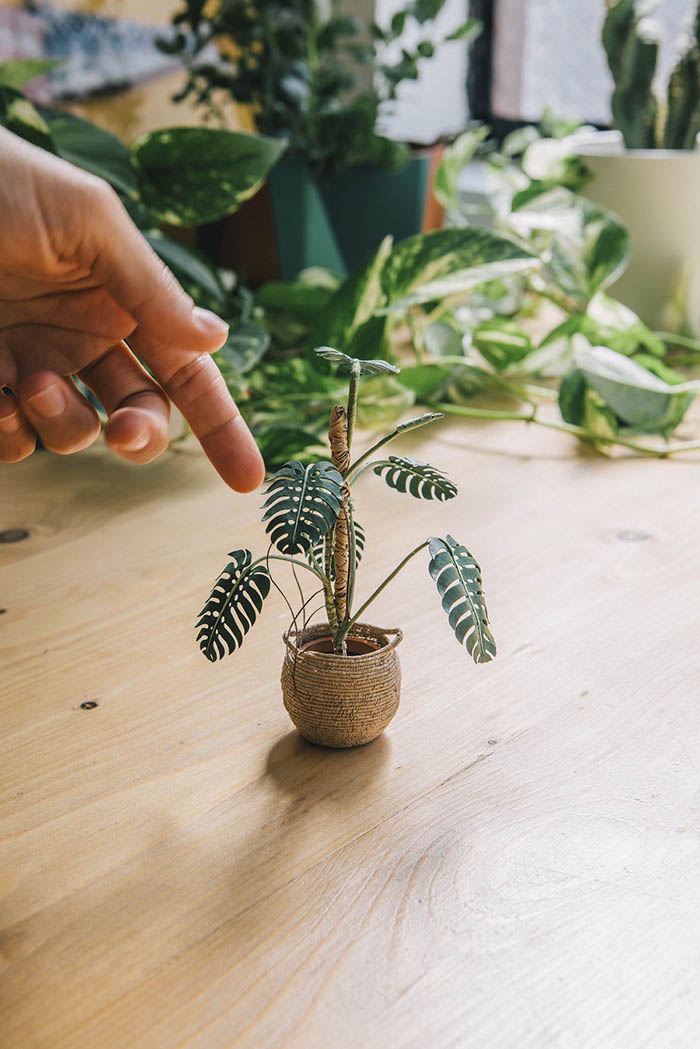 monstera paper plant