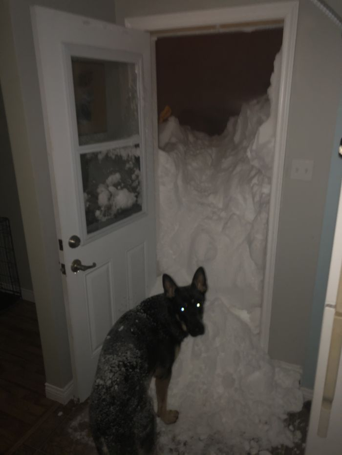 newfoundland blizzard ice on the door