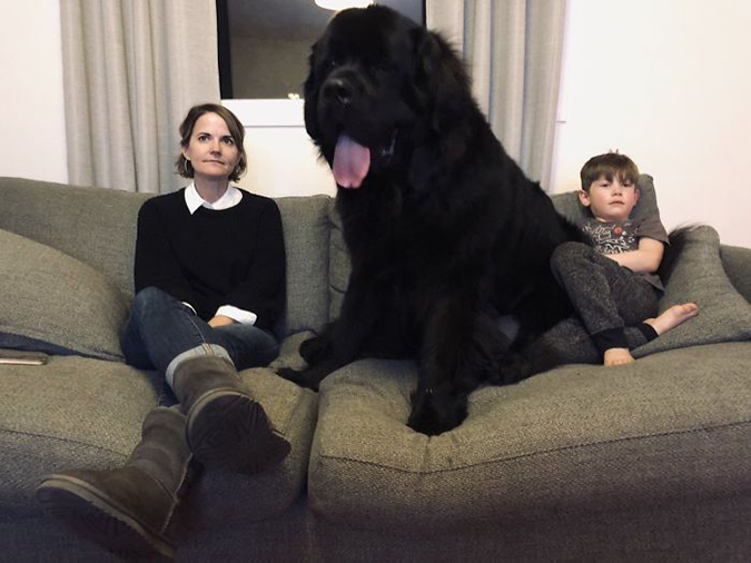 newfoundland sits next to mom and little boy on thanksgiving