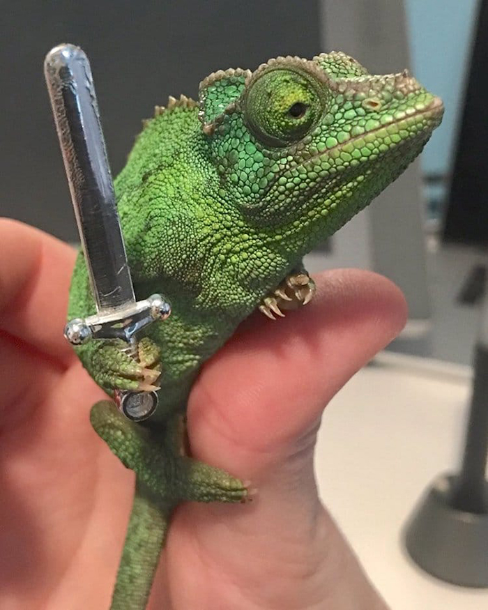 olive the chameleon holds a round-tip toy sword