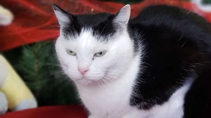 perdita the world's worst cat