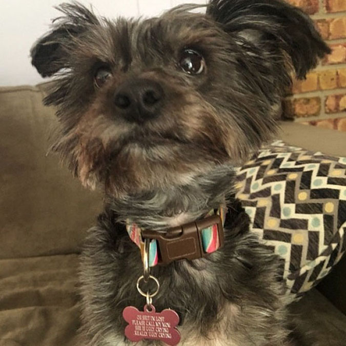 pooch wearing a funny dog tag