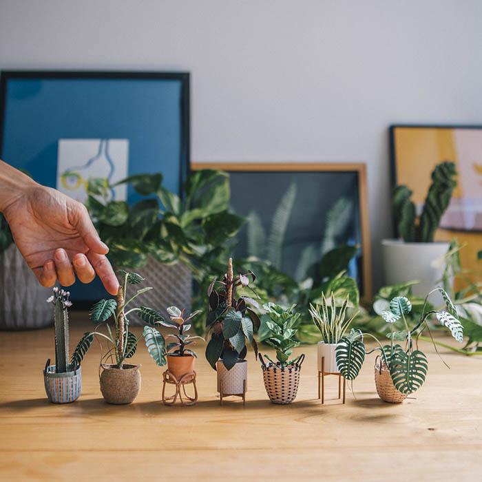 raya bujana and 7 paper plants