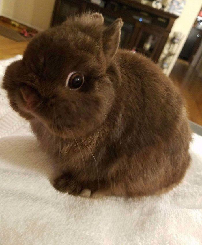 rescue pet dog fluffy bunny