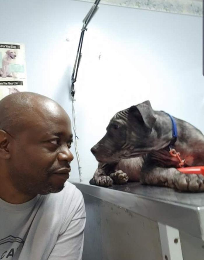 rescue pet dog visit vet clinic