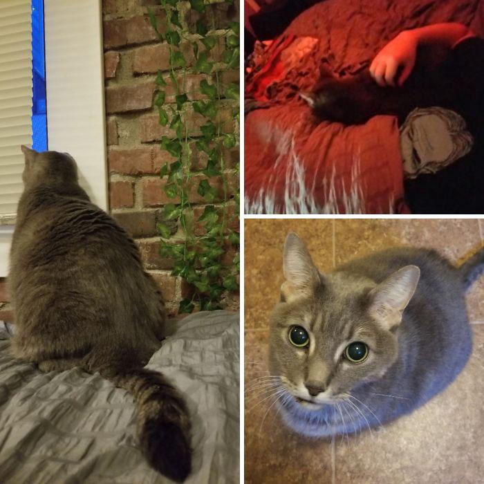 rescue pet skittish cat