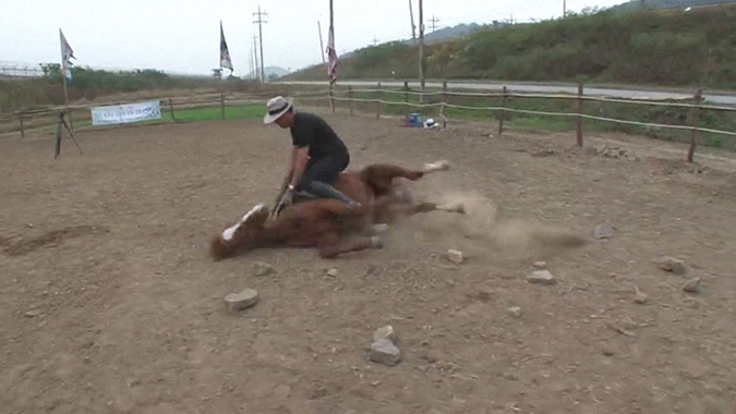 rider and horse on the ground