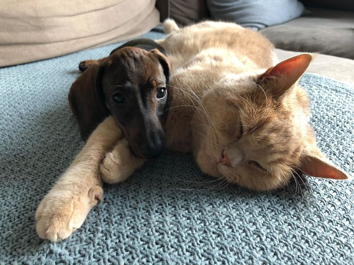 shelter animal adopted cat and dog inseparable