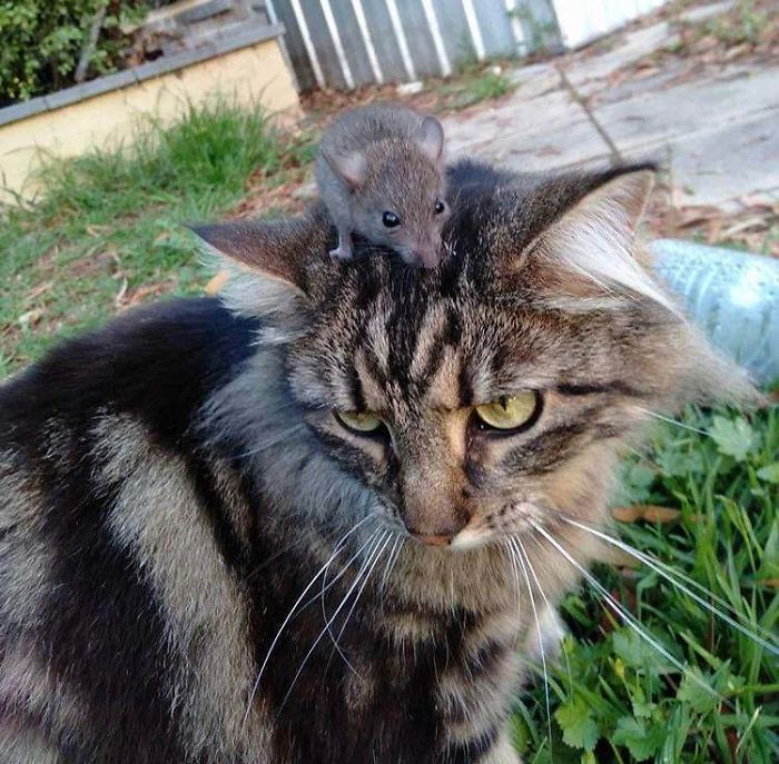 shelter animal adopted cat with mouse on head