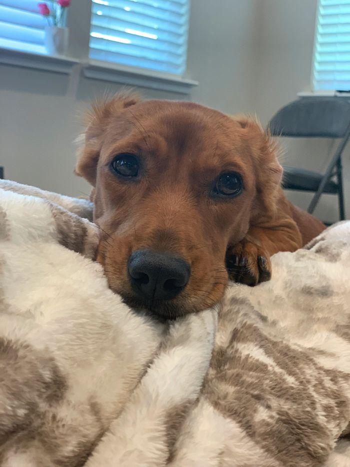 shelter animal adopted dog loving face