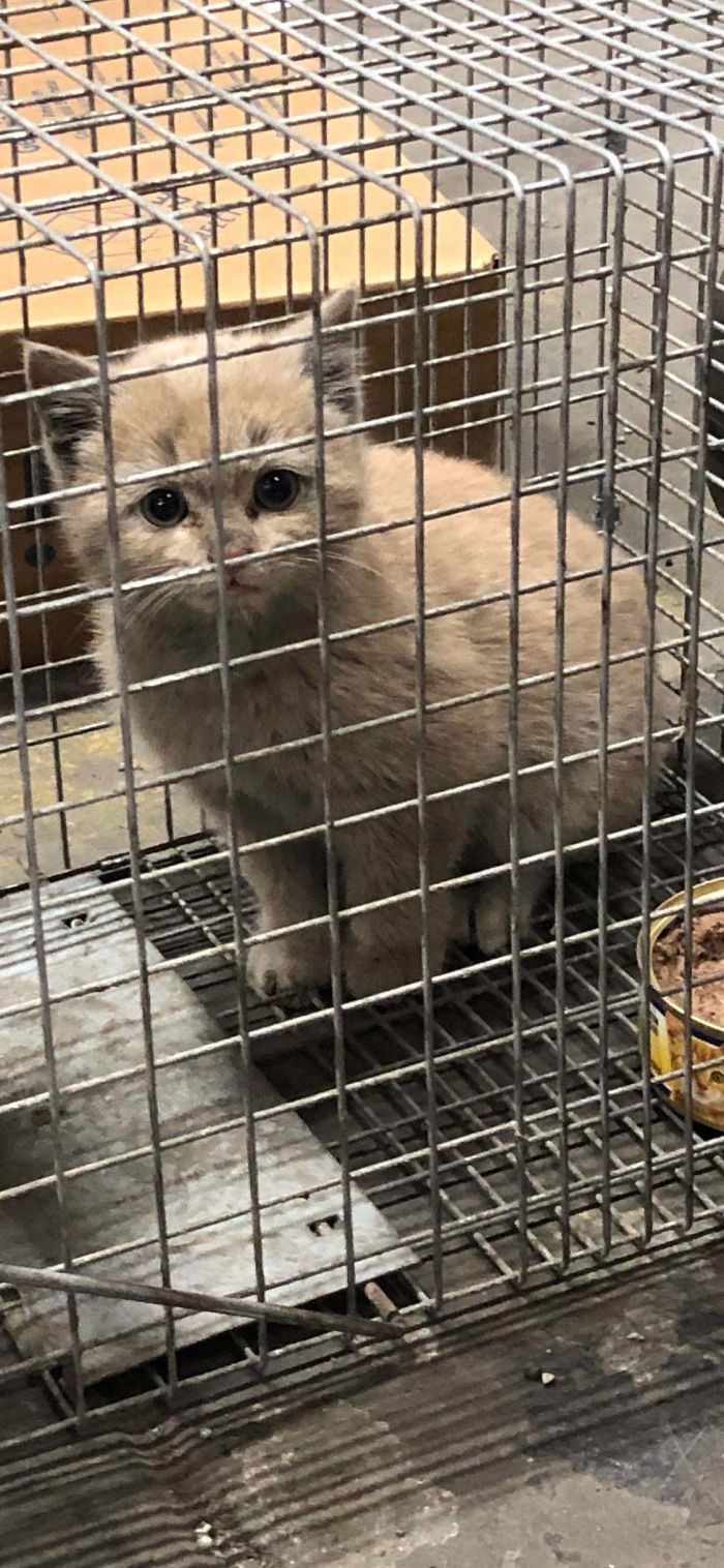 shelter animal adopted feral kitten