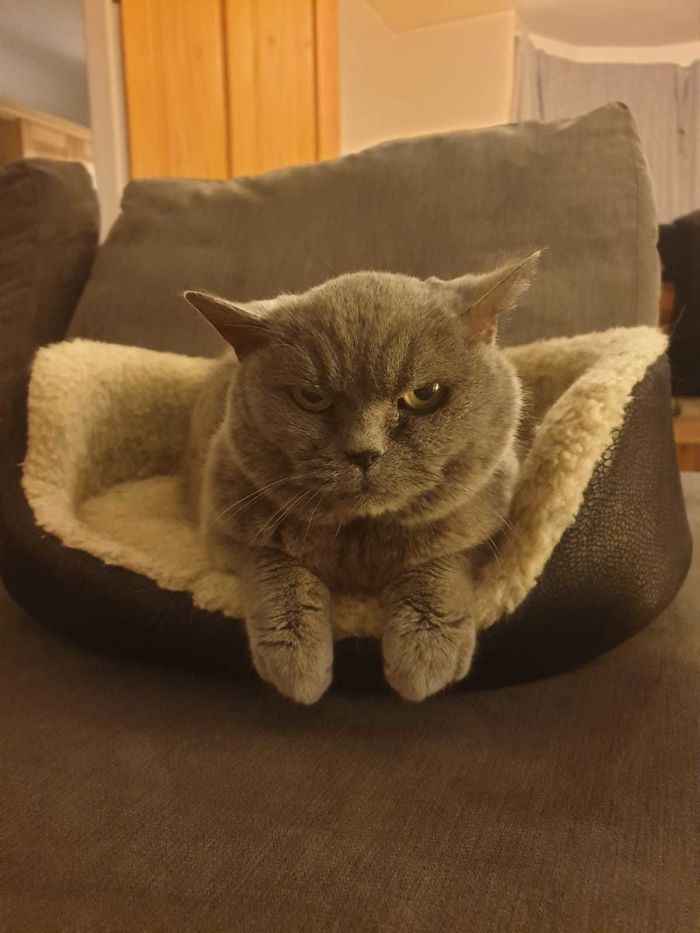 shelter animal adopted grumpy cat
