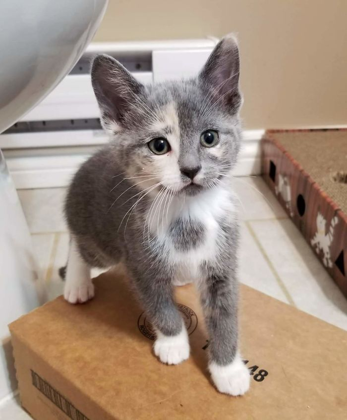 shelter animal adopted kitten with unique face