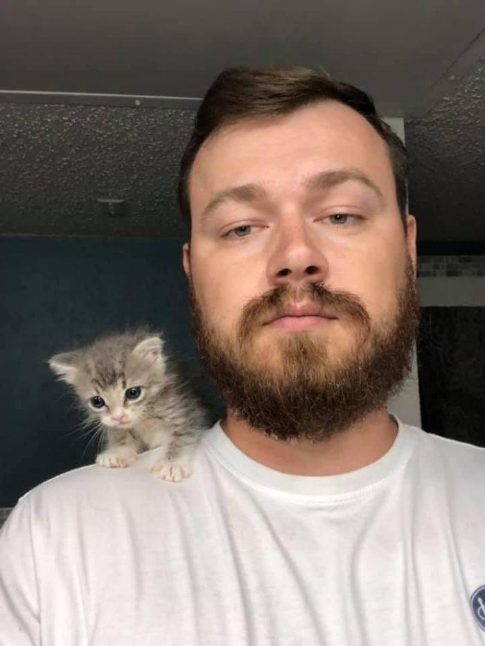 shelter animal adopted little kitten