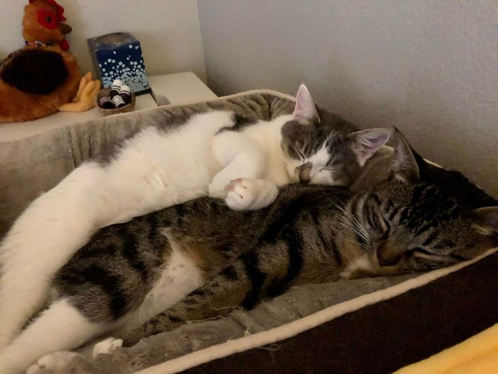 shelter animal adopted two kittens for daughter