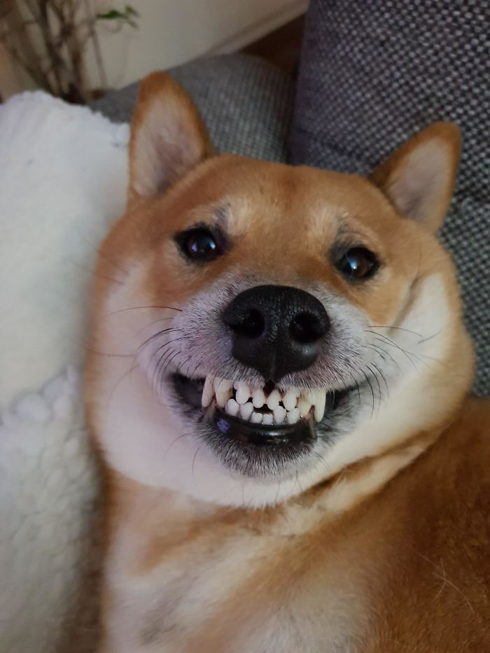 silly canine photos pearly white smile
