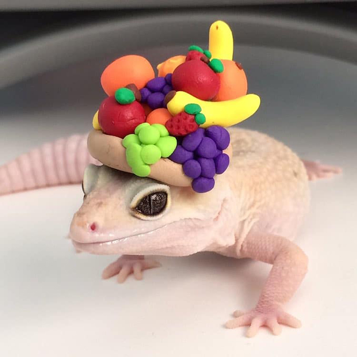 stimpy the gecko wears a fruit hat