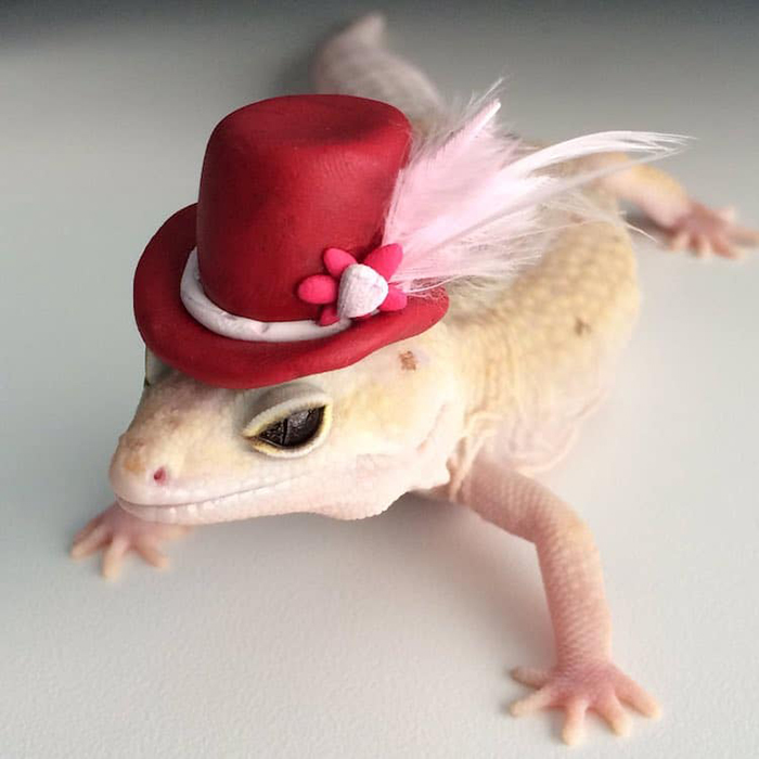 stimpy the gecko wears feathered hat