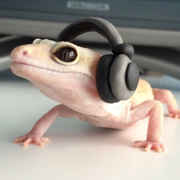 stimpy the gecko wears headphones