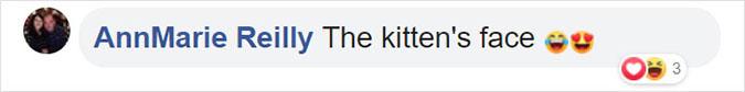 the kitten's face