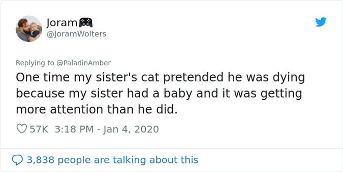 twitter folk share story about pets they thought were dying_cat got jealous of the baby