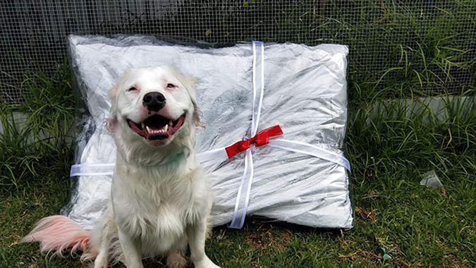 very happy disabled dog