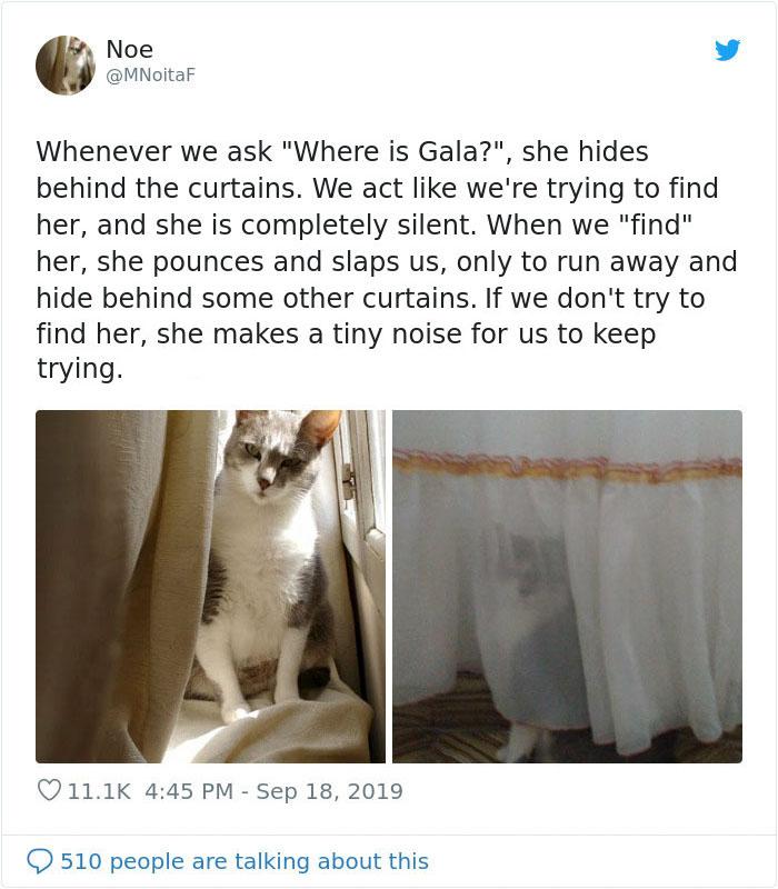 weirdo cats curtain play