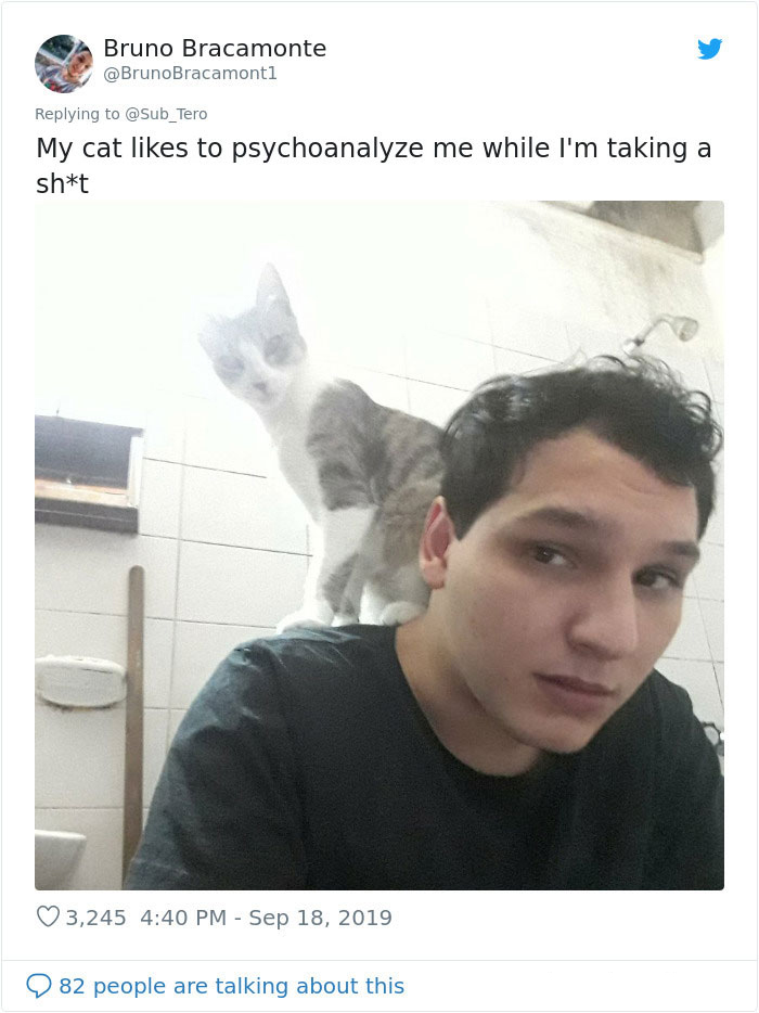 weirdo cats toilet room invader