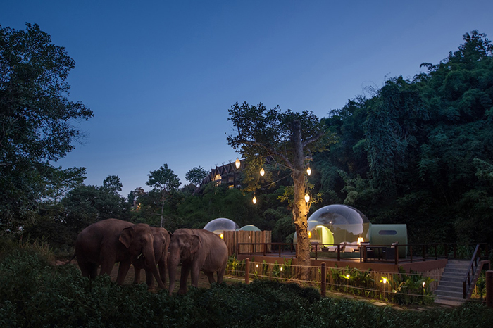 A Night in Nature at Anantara Golden Triangle Elephant Camp & Resort