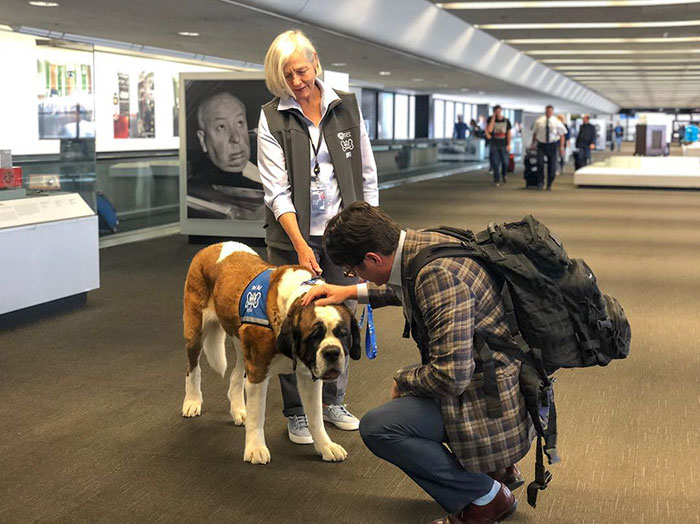 Airport Passenger Petting a Dog Member of the Wag Brigade