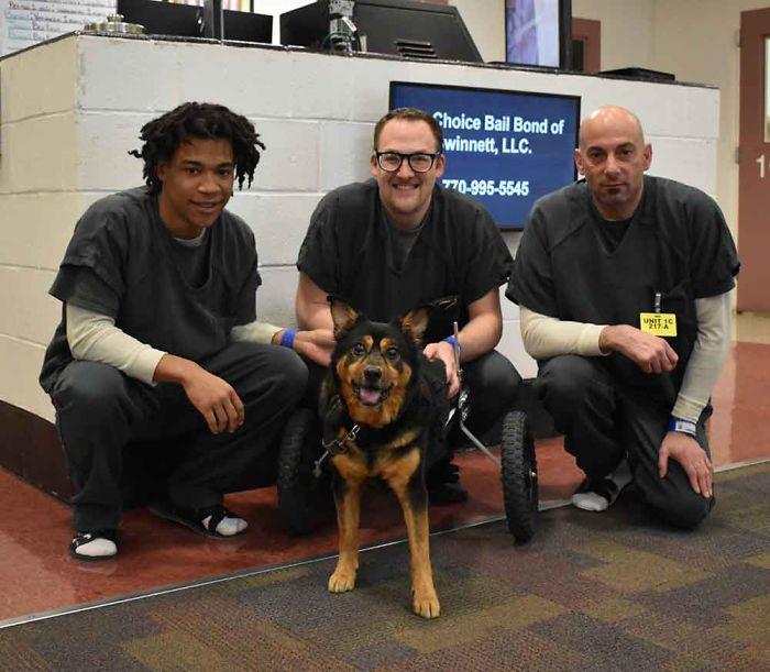 Bandit Taken In by Gwinnett Jail Dogs Program