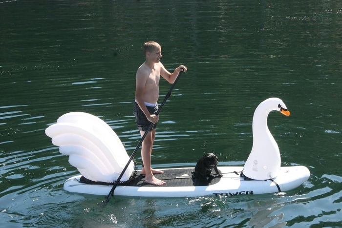 Boy and Dog on a Swan Paddleboard