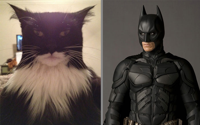 Cat That Looks Similar to Batman