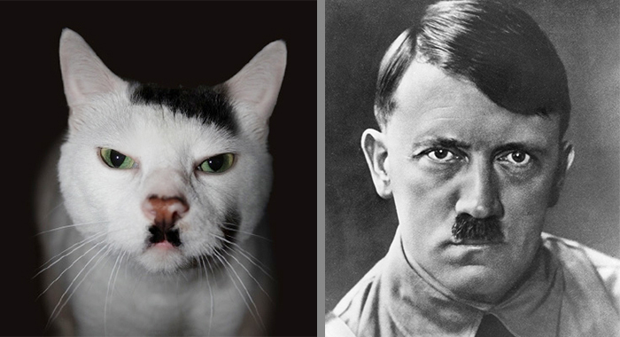 Cat That Looks Similar to Hitler