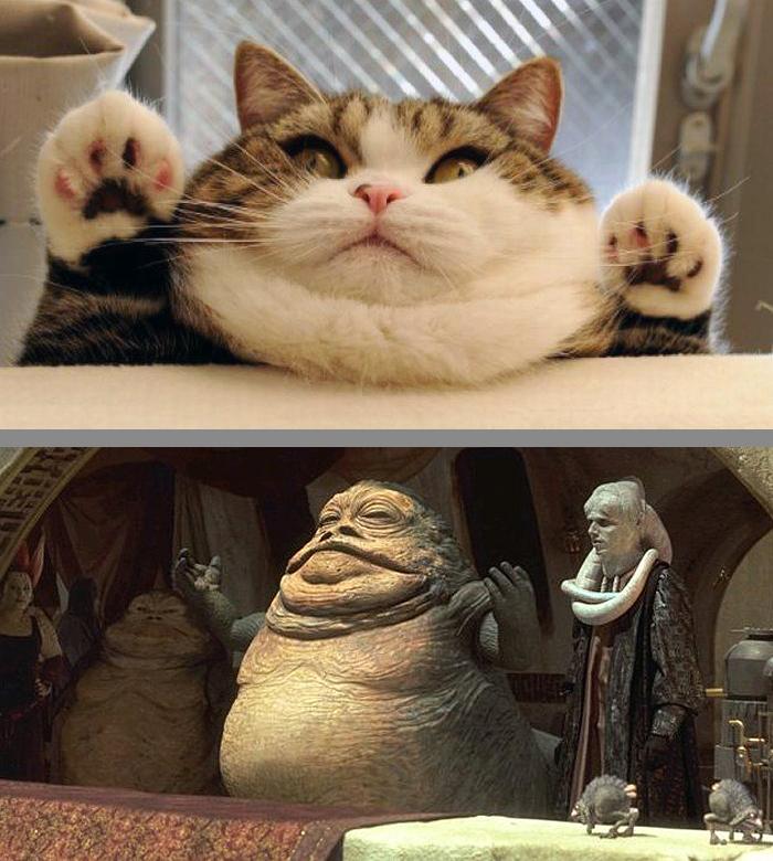 Cat That Looks Similar to Jabba The Hut