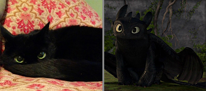 Cat That Looks Similar to Toothless