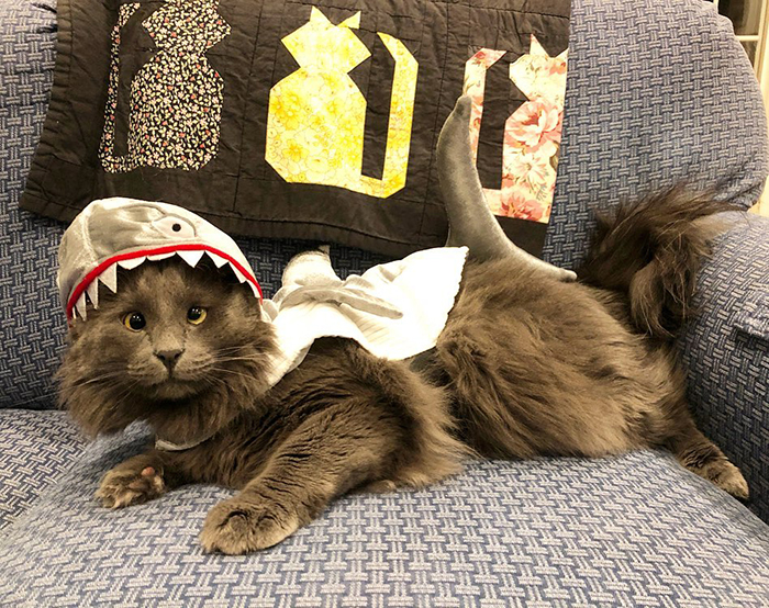 Cat with Crossed Eyes in Shark Costume
