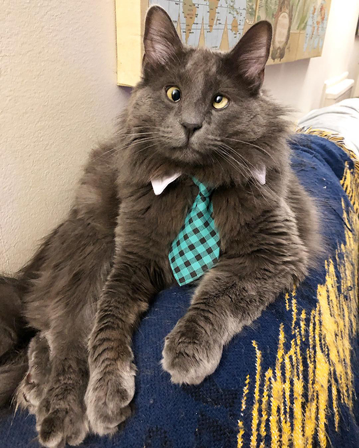 Cat with Crossed Eyes with Green Plaid Necktie