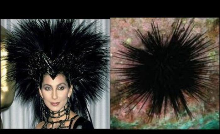 Cher's Hair Looks Similar to a Sea Urchin