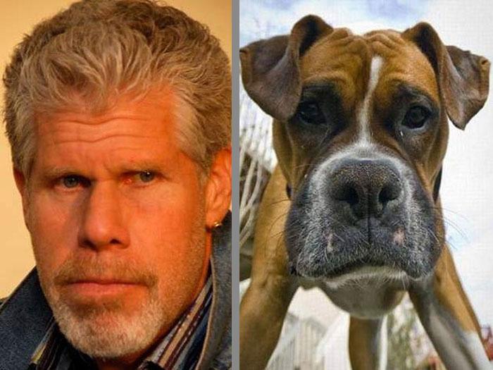 Dog That Looks Like Ron Perlman