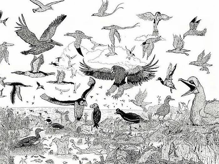 Dusan illustrates various birds with incredible detail