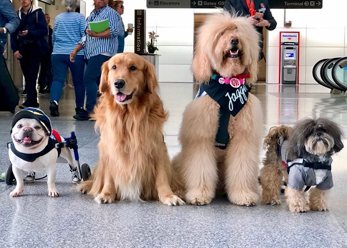 Four Dog Members of Wag Brigade at San Francisco International Airport
