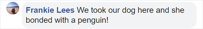 Frankie Lees Facebook Comment