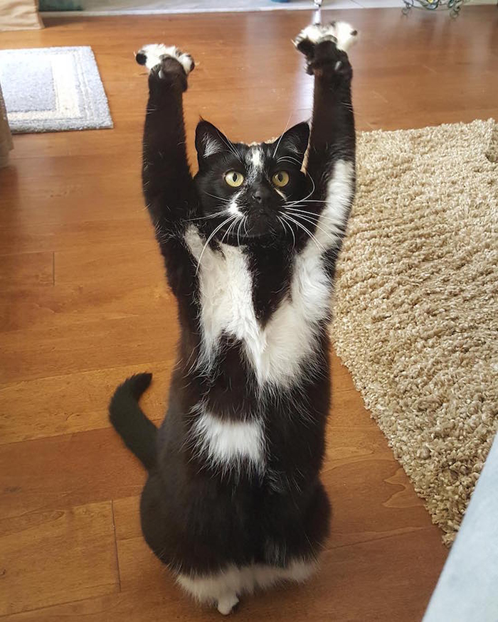 GoalKitty raises her paws up in the air