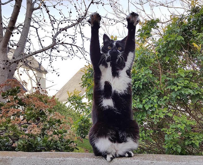 GoalKitty stretches while balancing on a wall