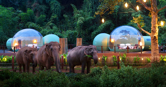 Jungle Bubbles Elephant Camp and Resort