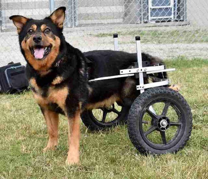 Special Needs Dog Named Bandit