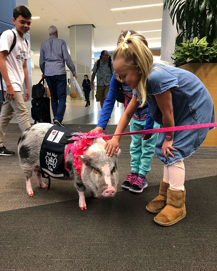 Two Girls Petting a Pig Member of the Wag Brigade